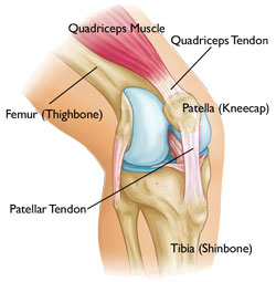 knee tendons omaha